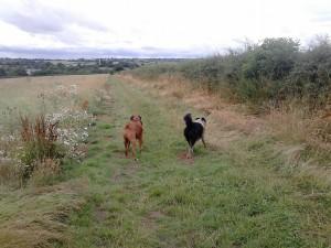 Bert and Jack enjoying the surroundings at Eckland Lodge